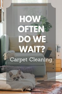 pet stain removal basics