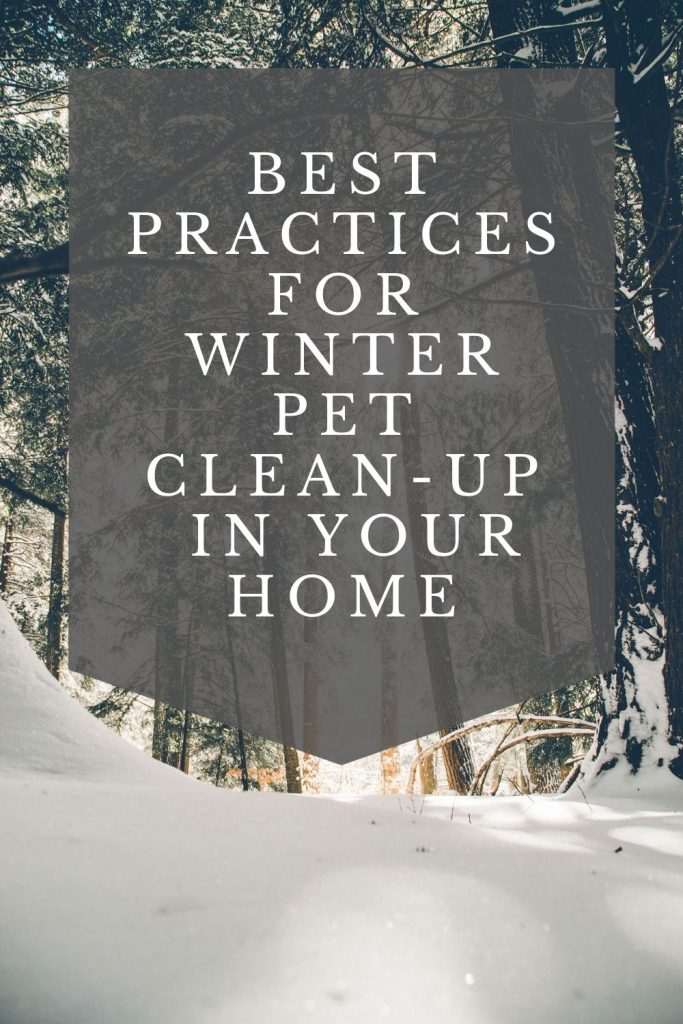 winter pet stain removal