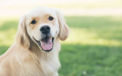 Pet Urine Removal Treatment: An Essential Part Of Spring Cleaning