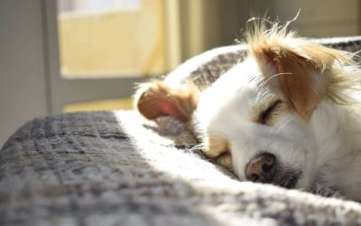 Why Pet Urine Removal Treatment Is An Essential Part Of Spring Cleaning