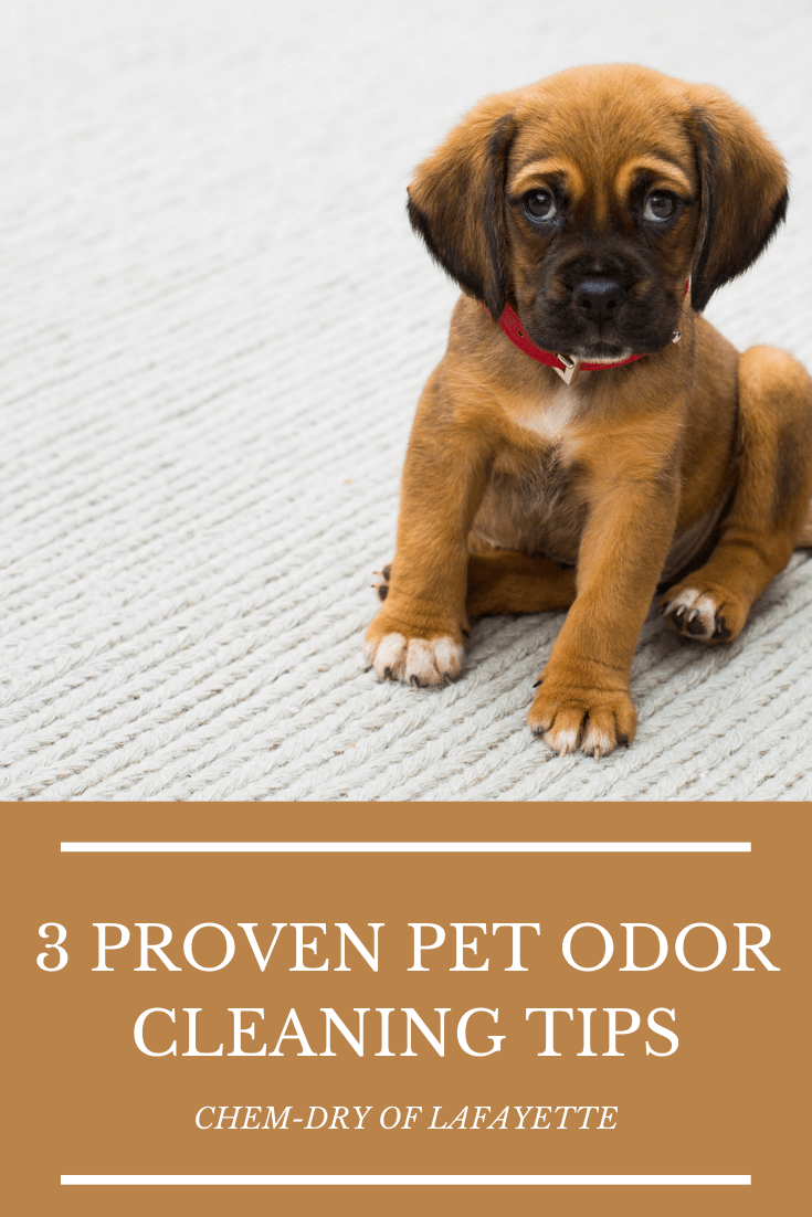 Pet Odor Cleaning in Dayton, OH