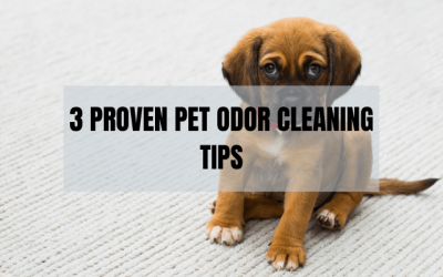 3 Proven Pet Odor Cleaning Tips